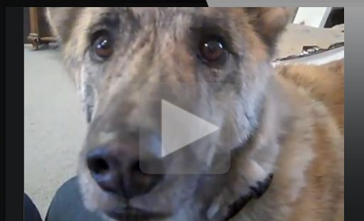 The Best Dog Talking Video Ever